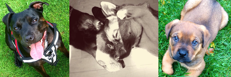 Puppy training in Stevenage- Dog Dynamics