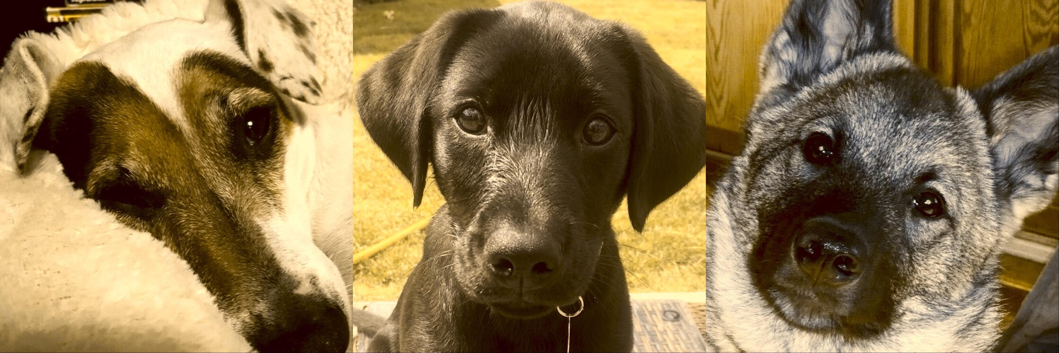 Dog Dynamics Hundetrening