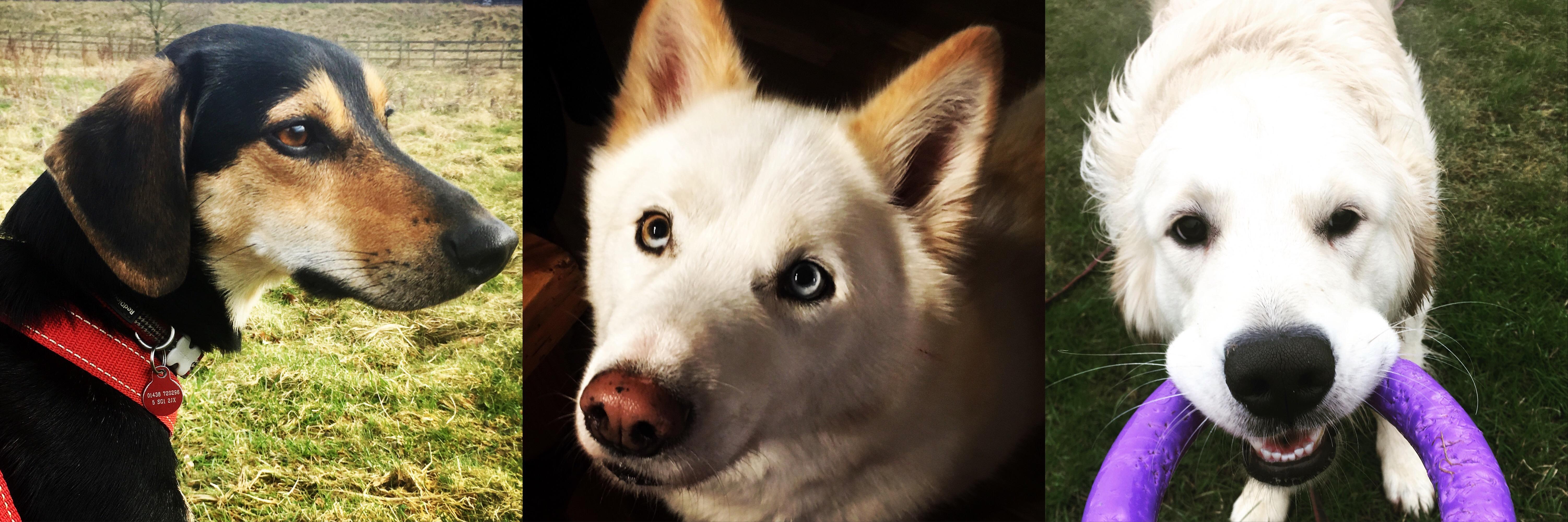 Hund med problemadferd
