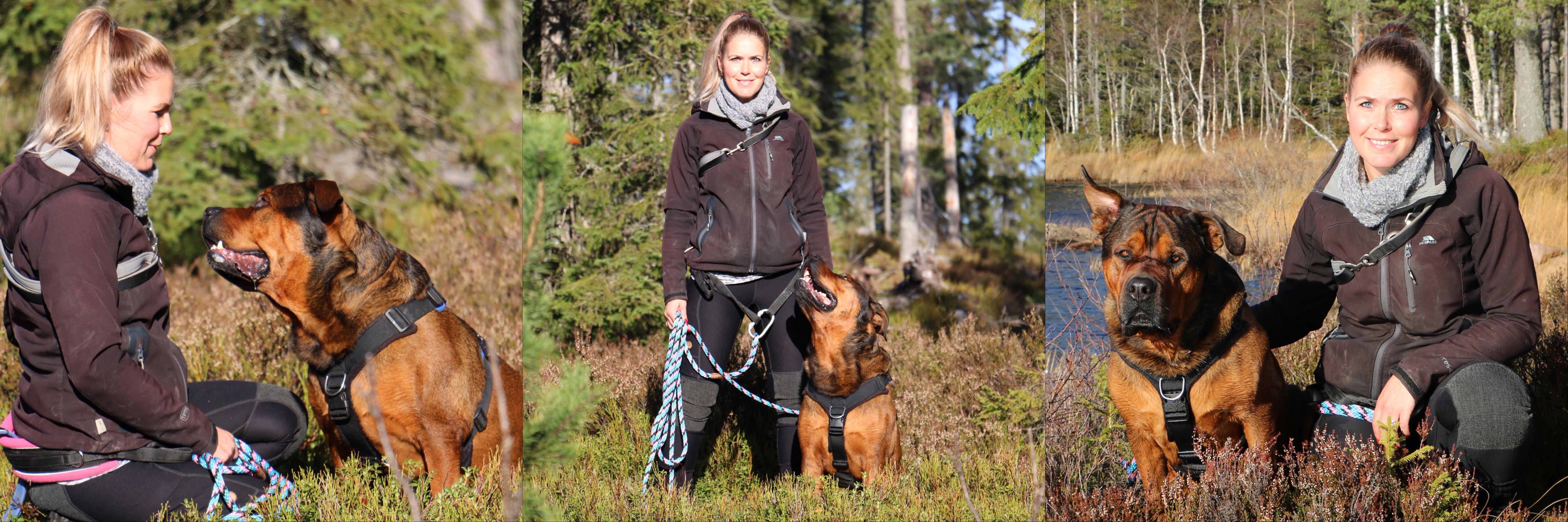 Hundetrening Vestfold og Telemark