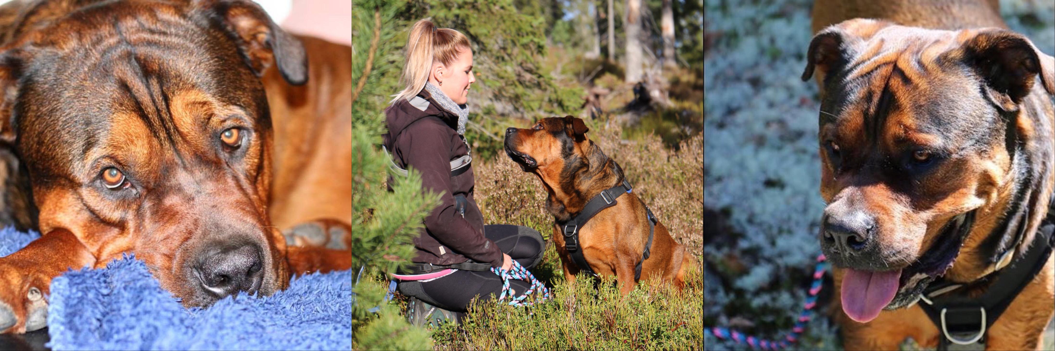 Hundetrening i Porsgrunn
